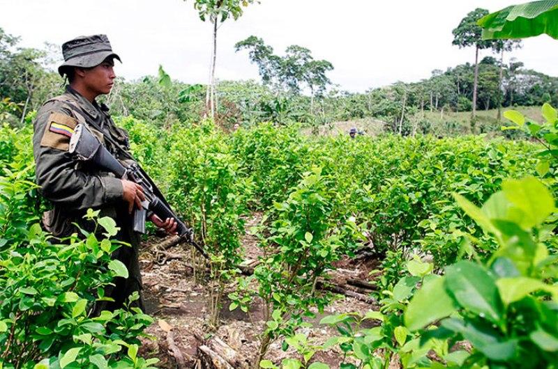 cultivo de coca1-narino