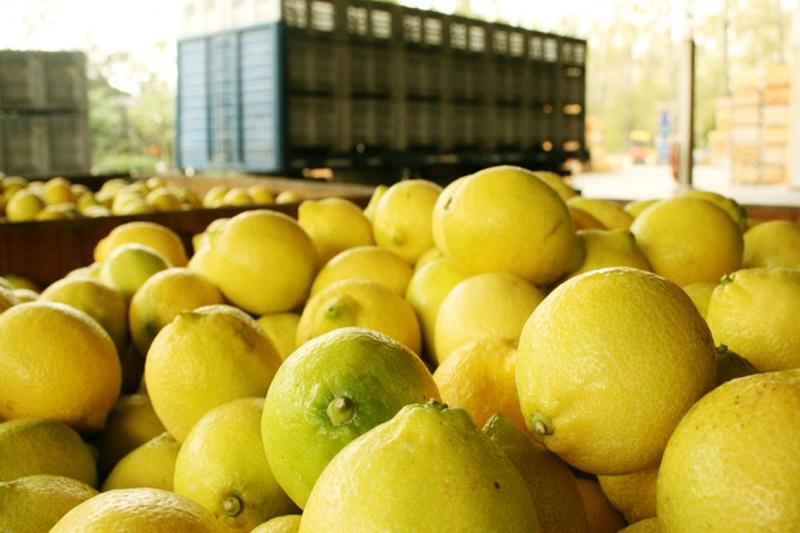 argentina limones
