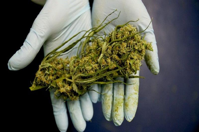 argentina marihuana uno