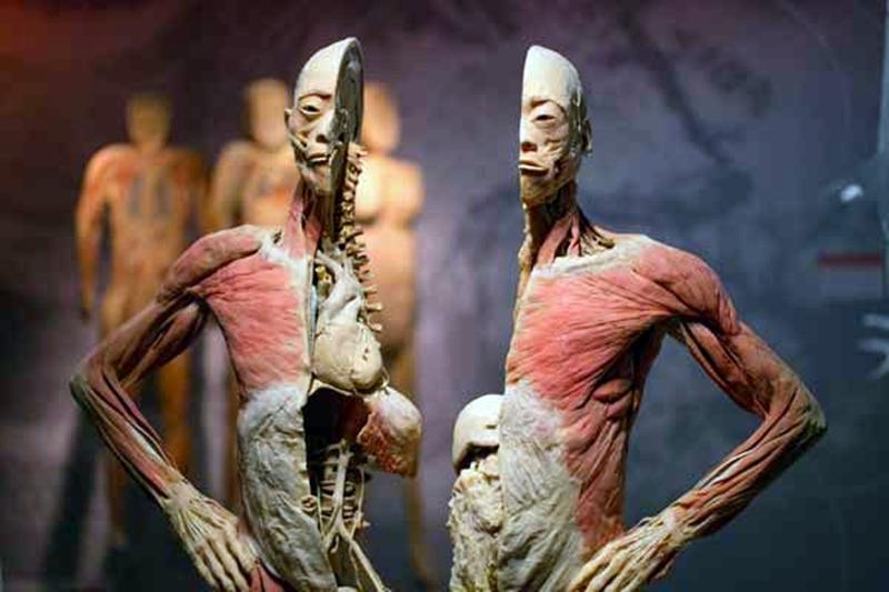 Cancelan parte de espectáculo que enseña anatomía humana en Roma ...