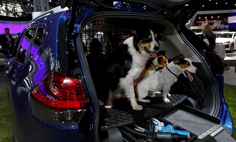 Un Border Collie (i) y dos Jack Russell terrier ocupan el compartimiento trasero del  japonés Nissan Rogue Dogue SUV durante el día de presentación a los medios en la Feria del Automóvil de Nueva York 2017 hoy, miércoles 12 de Abril de 2017, en el Centro Jacob K. Javits en Nueva York (EE.UU.)