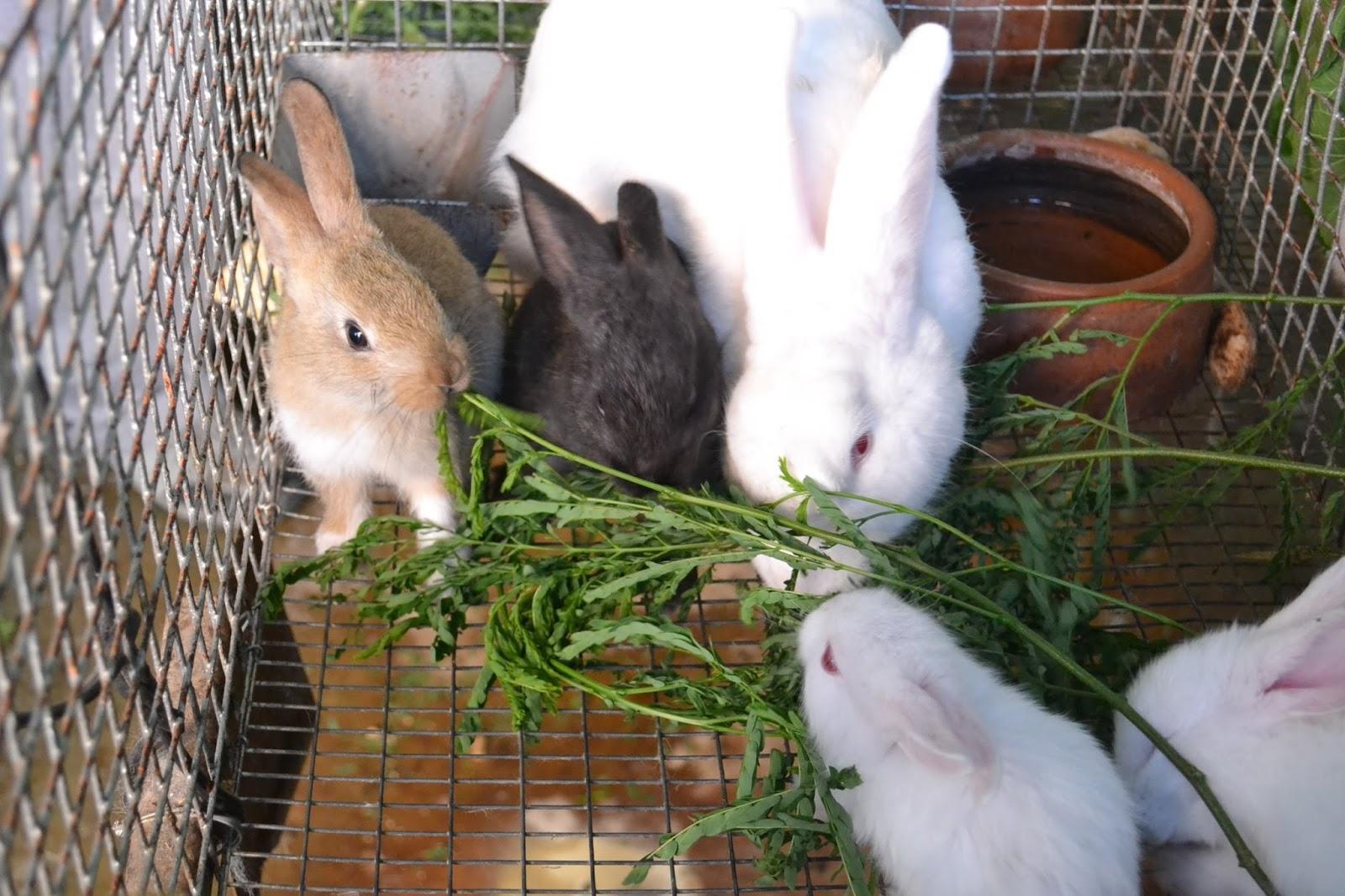 inti conejos