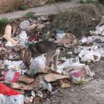 Un-perrito-sin-amparo-hurga-en-la-basura