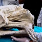 momia-extraterrestre-2